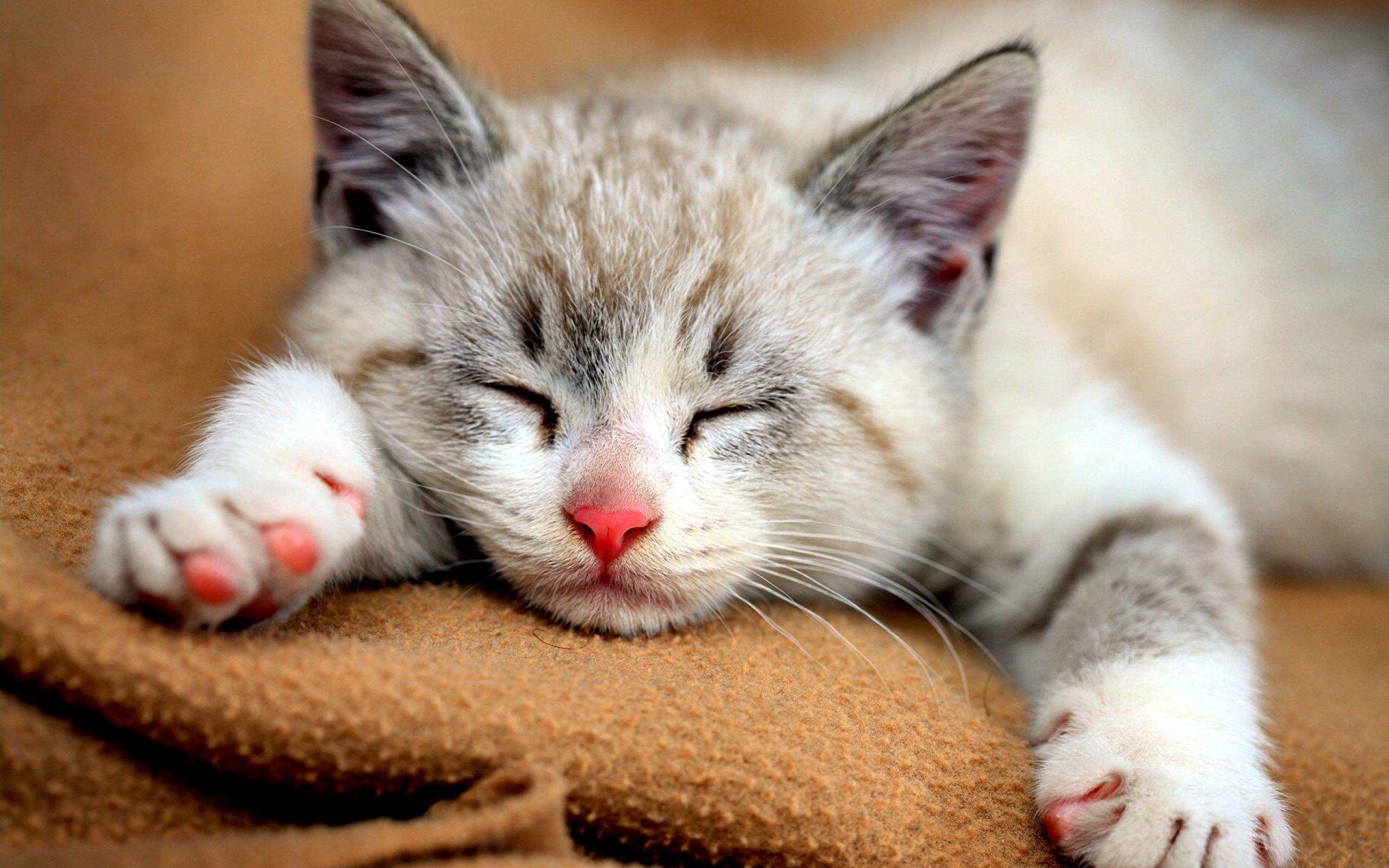 Спящий кот  № 1059188  скачать