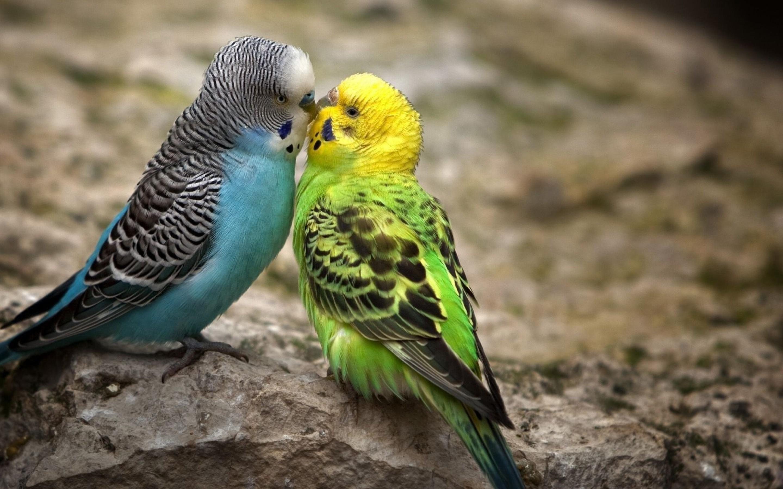 animal-couple09